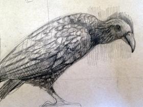 birdharvarddrawing