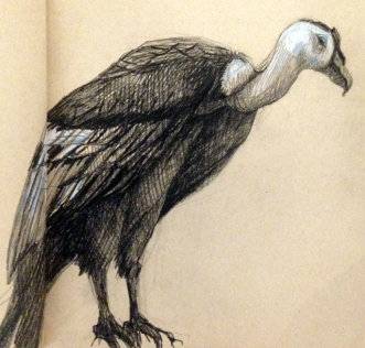 drawingcondor