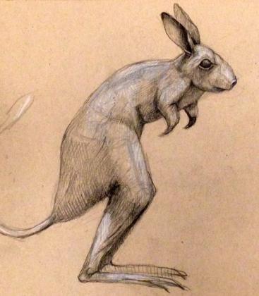 drawingjerboaside