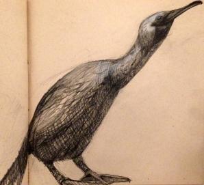 drawingormorant19
