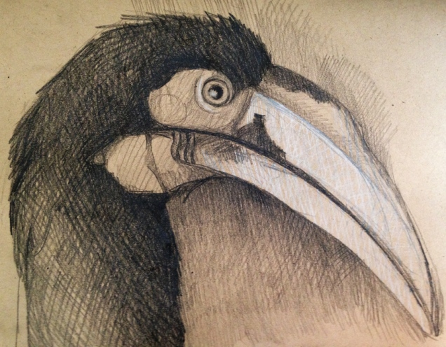 toucandrawing