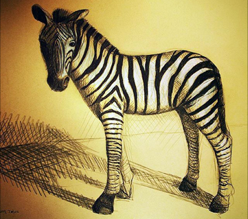 Zebra drawing - pencil