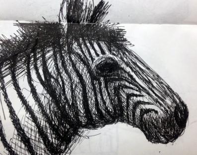 Zebra drawing - ink