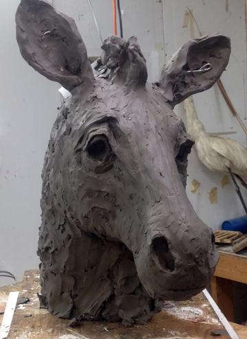 zebra life size clay head