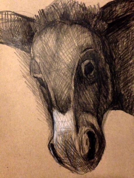 Boel's donkey