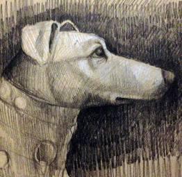 Carracci's dog