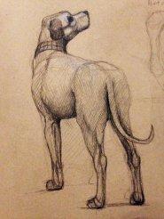 Poussin's dog